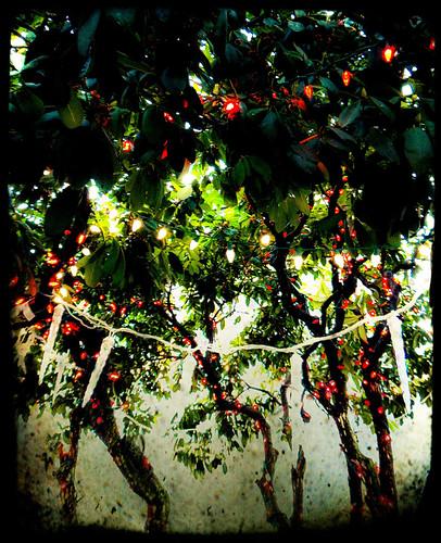 Xmas Lights strung in a Rhododendron bush run through the photo app Pixlromatic