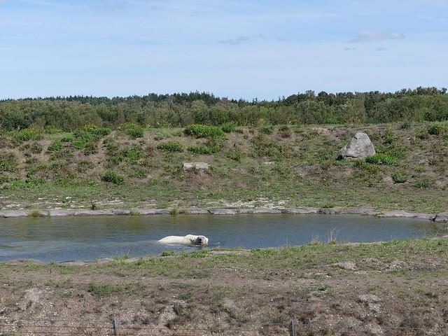 Eisbär, Skandinavisk Dyrepark Kolind