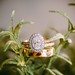 Engagement Rings  : Oval Cut Diamond Ring with a Halo and Encrusted Gold Band