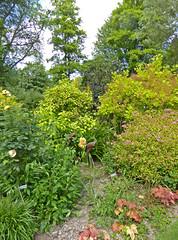 2018.06.20.088 CASTILLON - Les jardins, la clairière ensoleillée