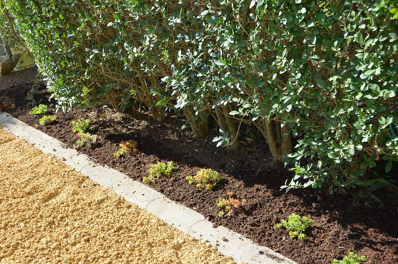 New Back Garden 05.10 (4)