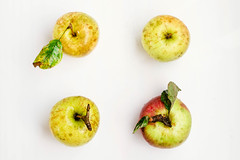 Top view of four fresh colorful apples on white background