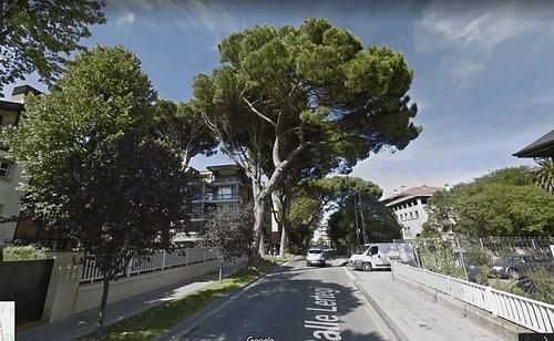 Árbol que acabará cayendo,... en la calle Lertegi de Getxo