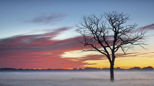 ochtendrood  en grondmist vanochtend  voor zonsopgang - Foto: Karin Broekhuijzen