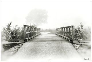 Morning Fog: Hat-tip to Pictorialism