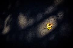 Alone in Autumn Light