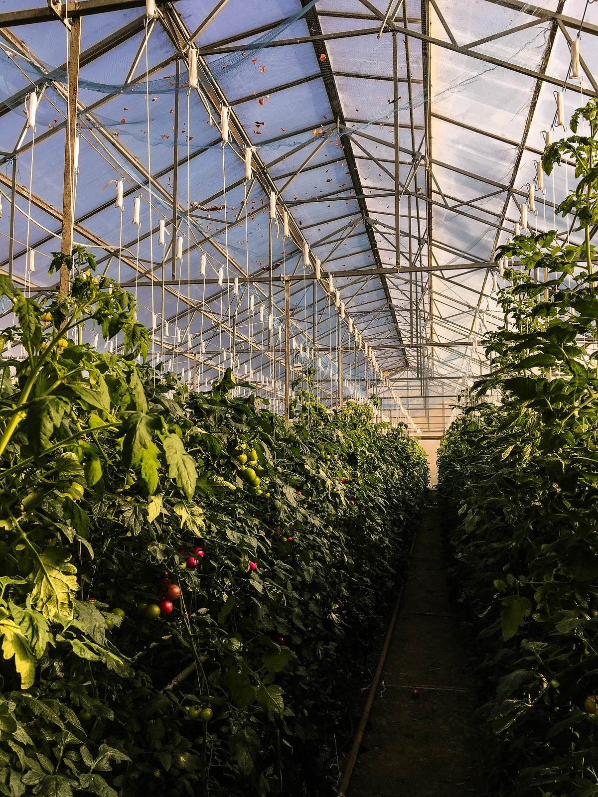 Ändebols gård IMG_8872-2