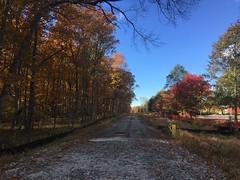 Abandoned Poplar Tree Road - Fall 2018