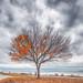 Ravens Tree, Crescent Beach, BC by gks18