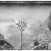 LEICA M MONOCHROM(Typ246)  Zunow 50mm f1.1 (L) Black by Camera of Bob