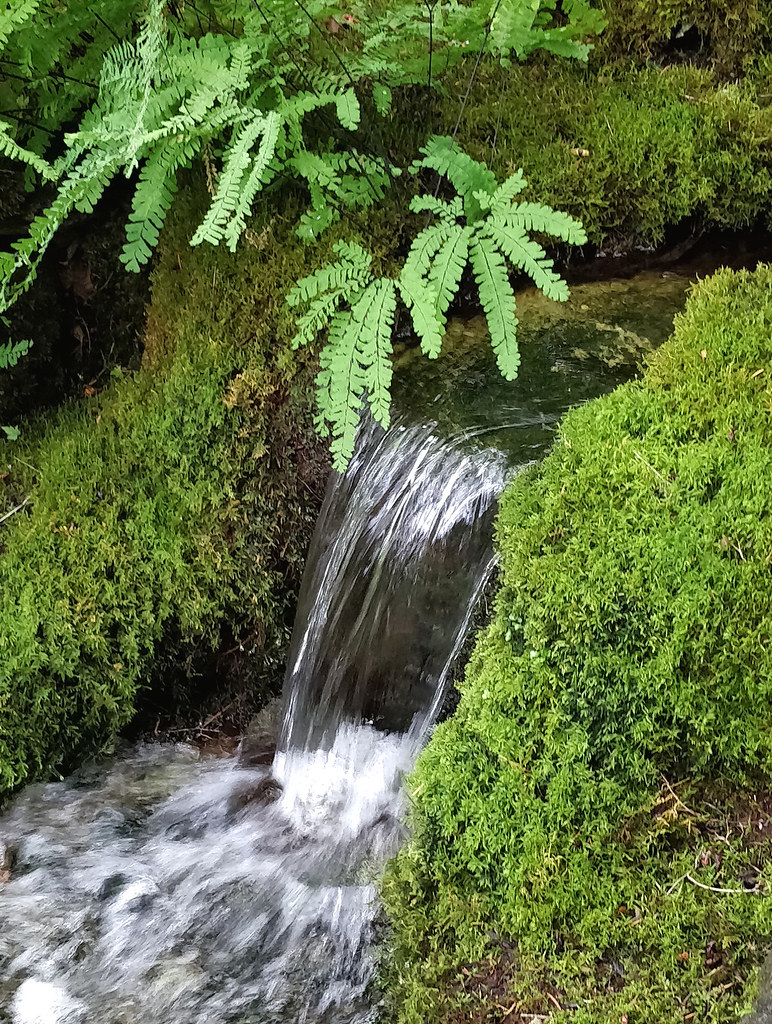 Mini Waterfall In The Japanese Garden | Ruth Hartnup | Flickr