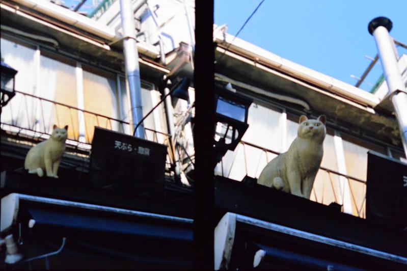 Pen FT+F zuiko Auto S 38mm f1 8+FUJIFILM PROVIA100F谷中ぎんざの猫