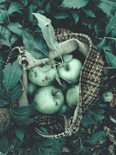 Green apples | Fruit & Veg