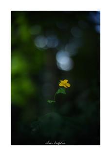 2018/9/16 - 2/18 photo by shin ikegami. - SONY ILCE‑7M2 / 七工匠  7artisans 50mm f1.1