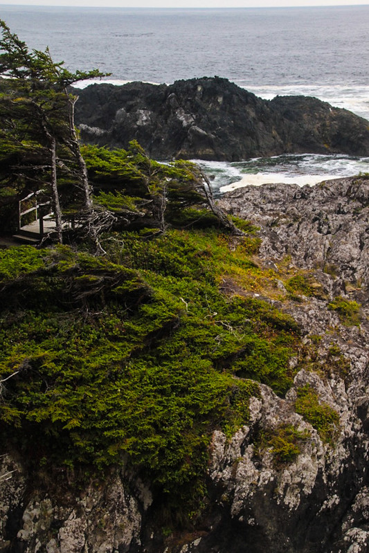 Canada-Ucluelet-WildPacificTrail17