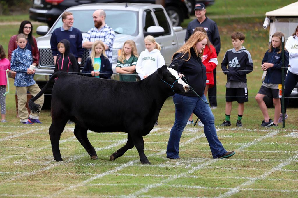 Cow Plop 2018