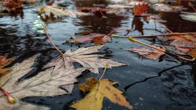 November 1 - Floodlands