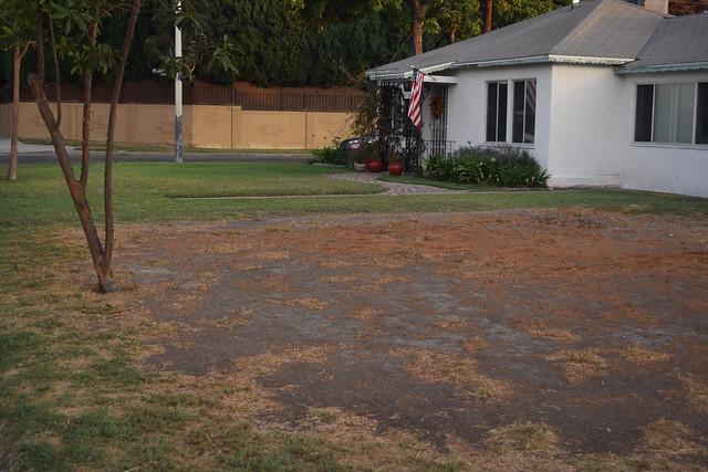 drought yard