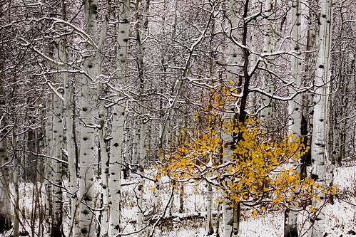 davidleeshort autumn aspen mountain grandmesa fog snow