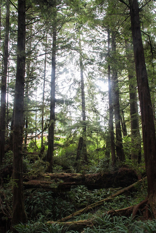 Canada-Ucluelet-WildPacificTrail5