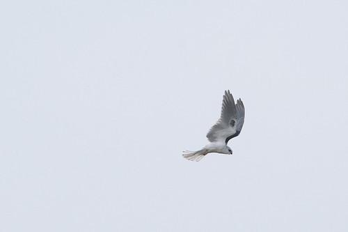 ca.wt kite.6197