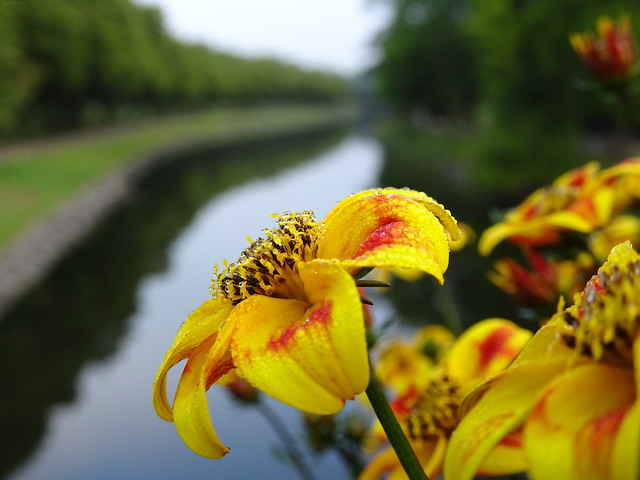 Summer Flowers Over Canal ☺
