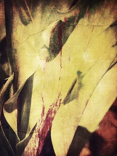 Burgundy Calla Lily run through the photo app Stackables using the formula Cracked Sepia