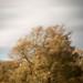 The Autumn Breeze