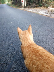 IMG_20180916_083055 - Photo of Montner
