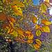 Autumn sunlight (explored)