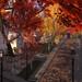 Philomena Autumn Dawn on Thoreau St._009