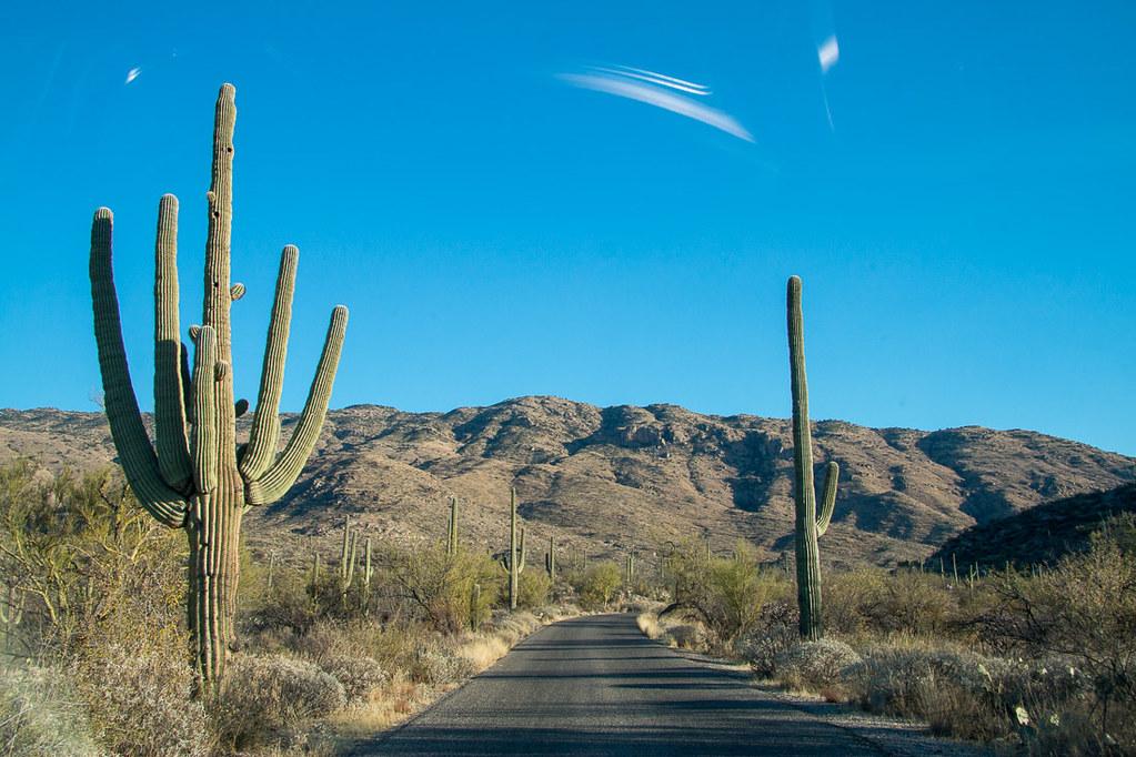 Scenic Cactus Drive in Tucson Arizona