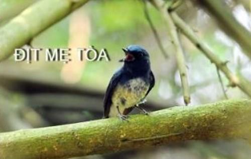 ditme_toa01