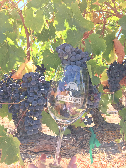 Dracaena Wines, Paso Robles, CA