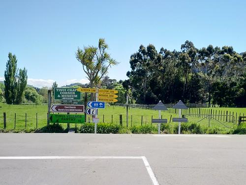 outdoor tree cabbage eucalyptus gum poplar road sign tinui wairarapa newzealand