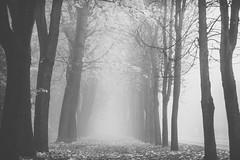 Foggy morning | Kaunas, Lithuania #294/365