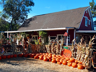 Pumpkin Barn, Green Spot Farm 10-13