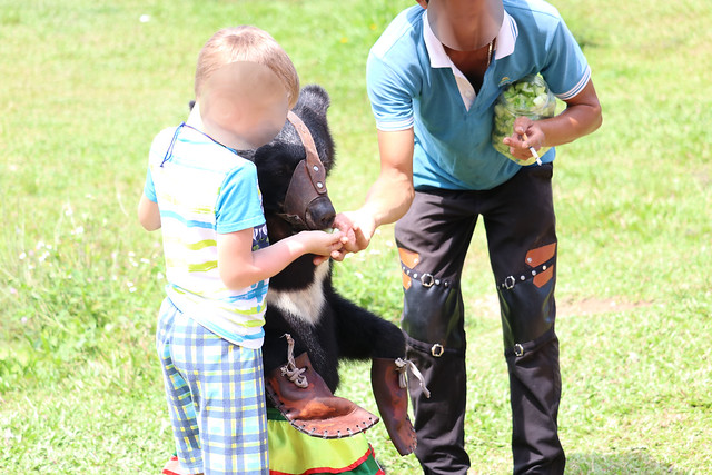 foreign child with masked juvenile moon bear on stage