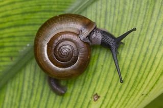 _Z2A1456 terrestrial snail