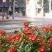 Sidewalk Flowers 2 of 2