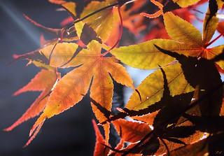 It's fall...
