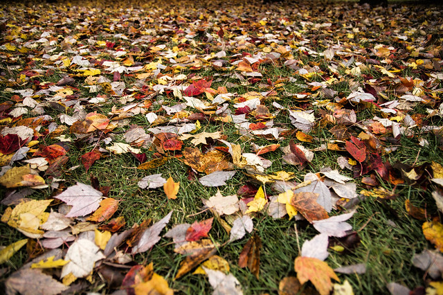 November 2 - All I see is chores