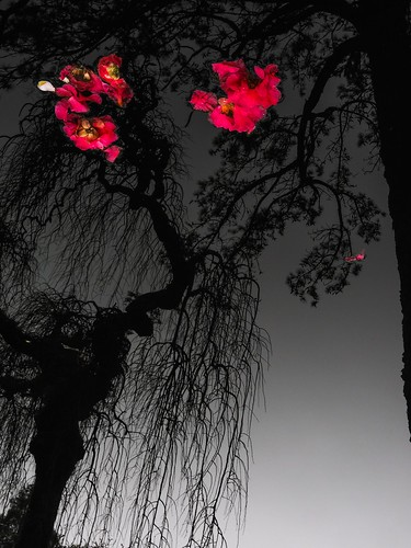 Flores impropias