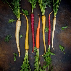 We all know that carrots can come in a variety of colours, but which ones have you tried? . #agriculture #farm #farming #farmlife #countryside #countryliving #nature #rural #family #farmer #familyrun #familybusiness #britishfarming #countrylife #agronomy
