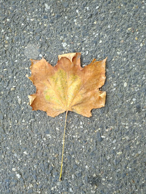 Fallen Leaves #6
