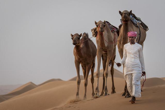 Sharqiya Sands Camels