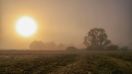 Morgens auf den Elbwiesen