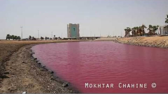 "3059 Why The Pink Lake in the heart of Jeddah turn ""Pink"" in Summer 01"