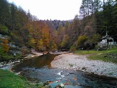 Selva de Irati 28-10-2018