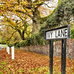 Ivy Lane Sign Autumn
